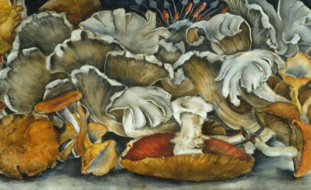 Oyster Mushrooms, Oil 12″ x 6″